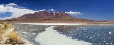 离开湖拉古纳Cañapa, Altiplano,玻利维亚在一个晴天 免版税库存照片