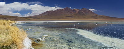 离开湖拉古纳Cañapa, Altiplano,玻利维亚 库存照片