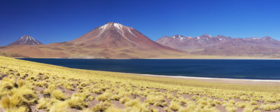离开湖拉古纳Miscanti和火山, Altiplano,智利 免版税图库摄影