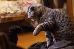 离开猫 免版税库存图片