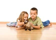 开玩笑小猫新使用他们 库存图片