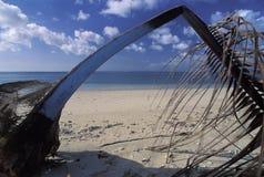 离开的海滩,多巴哥 库存照片