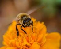 离开的特写镜头花和蜂 免版税库存图片