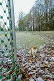 离开的足球场在冬天 免版税库存图片