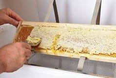 开盖在塑料木盆的蜂窝 免版税库存照片