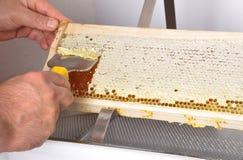 开盖在塑料木盆的蜂窝 图库摄影
