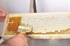 开盖在塑料木盆的蜂窝 免版税库存图片