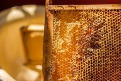 开盖的蜂窝用蜂蜜 库存图片