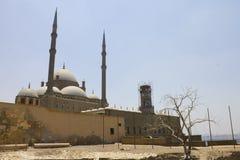开罗城堡和一个老结构树 免版税库存图片