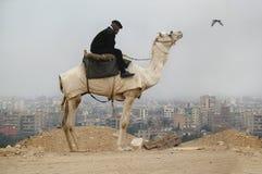 开罗 吉萨棉谷埃及1月05日2008年:警察供以人员坐骆驼,开罗市在背景 免版税图库摄影