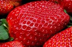 开胃新鲜的草莓 免版税库存图片