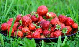 开胃新鲜的草莓 免版税库存照片