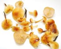 开胃新鲜的蘑菇 库存图片