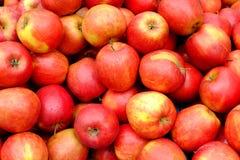 开胃红色苹果背景 免版税库存照片