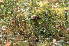 开胃美丽的森林蘑菇 免版税库存图片