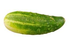 开胃背景黄瓜照片成熟非常白色 免版税库存图片
