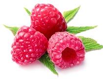 开胃莓宏观射击。 图库摄影