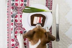 开胃菜传统乌克兰语 库存图片