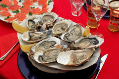 开胃菜新鲜的牡蛎 免版税图库摄影