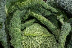 开胃菜(被射击的特写镜头) 免版税库存图片