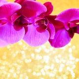 开花一朵明亮的桃红色兰花的分支的假日卡片在去的 库存照片