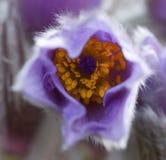 开花不可思议的颜色 免版税图库摄影