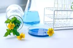 开花与与蓝色液体的实验室玻璃器皿化学制品的 库存照片