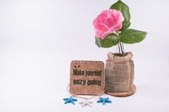 开花与启发的美丽的一朵桃红色玫瑰措辞Isolat 库存图片