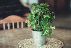 开花与在一个罐的绿色叶子在桌上 免版税库存照片