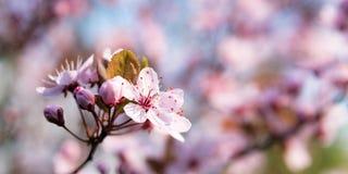 开花与拷贝空间的背景在春天 库存照片