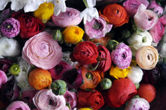 开花与毛茛属,中介子,玫瑰的婚礼安排 免版税库存照片