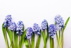 开花与淡紫色风信花的构成 免版税库存图片