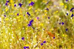 开花与阳光的狸藻 库存图片