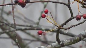 开花与水下落在冬天,菲森,德国 库存照片