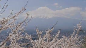 开花与Mt的樱花分支 富士 股票录像