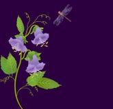 开花会开蓝色钟形花的草 免版税图库摄影