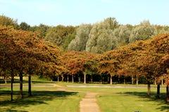 开花公园在秋天 库存图片