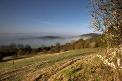 开花前景有薄雾的早晨 库存照片