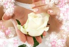 开花包围的玫瑰花蕾 免版税库存照片