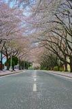 开花包括街道 免版税图库摄影