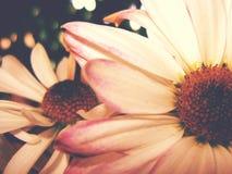 开花反对花背景的美丽的花  免版税图库摄影