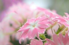 开花反对花背景  图库摄影