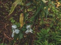 开花和垂悬在森林里的两束白花 免版税库存图片