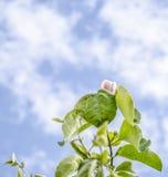 开花和天空 免版税库存照片