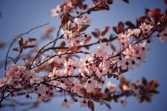 开花和蓝天 免版税库存照片