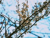 开花和蓝色 库存图片