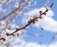 开花和蜂 库存图片