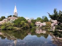 开花在一个公园的佐仓在东京 免版税库存图片