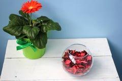 开花在一个罐和一个玻璃花瓶有玫瑰花瓣的 库存照片