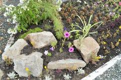 开花在与岩石的花床,高山幻灯片上开花 免版税库存图片